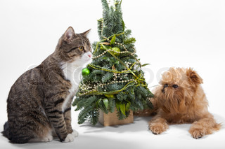 Dog and cat lies near the Christmas tree