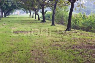 grüne Bäume im Park und Sonnenlicht