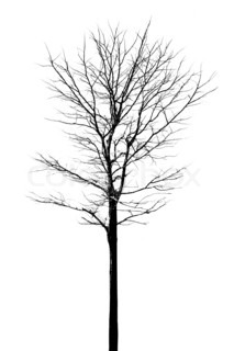 Tree structure with no leafs