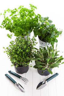 Herbs for planting