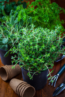 Different herbs for planting