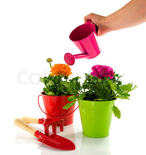 red and green bucket with spring flowers
