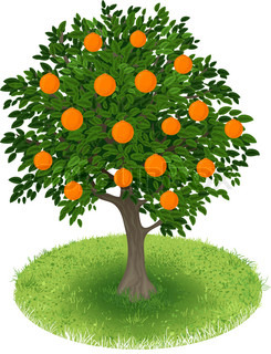 Orange Tree in green field