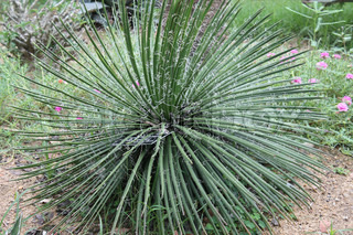 green plant agave