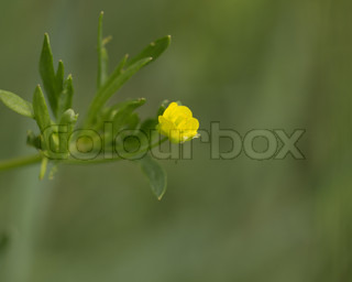 beautiful yellow flower in nature macro