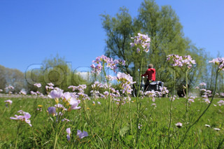 Lady in red is biking along a field of blooming cuckoo flowers in her spare time in spring, wonderful sight.
