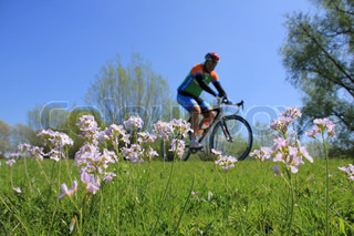 A cyclist is biking along a field of blooming cuckoo flowers on the bike path in his spare time.
