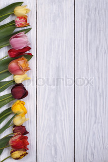 Festive frame of flowers tulips on the wooden background