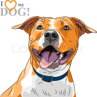 Closeup Portrait Of The Smiling Dog American Staffordshire