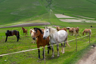 Herd of horses of various colors in the mountains of Italy