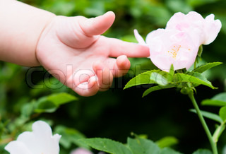 little hand touches a flower