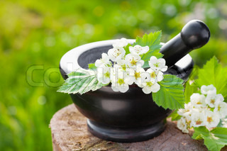 mortar with blossom hawthorn, herbal medicine