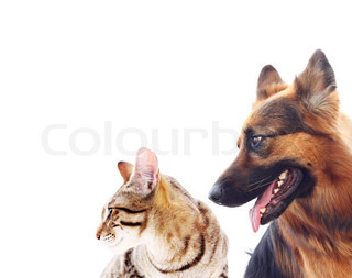 Long-haired german shepherd dog and a cat