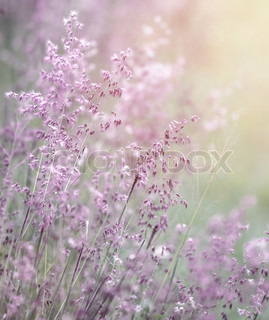 Dreamy pink flowers field