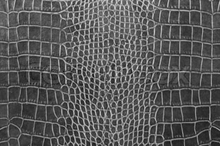 black crocodile skin texture