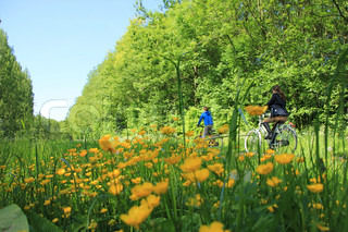 Mother and son are biking along many trees and a field of blooming buttercups in spring.