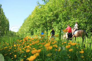 Happy family are biking, one kid is riding a horse between a field of blooming buttercups in spring.