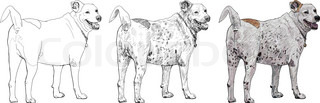 The castrate dog