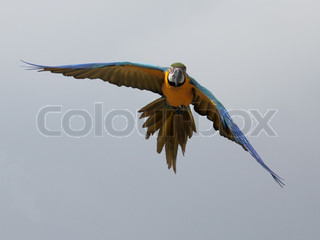 picture of a beautiful tropical parrot flying in the sky
