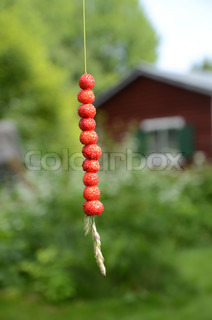 Wild strawberry on a straw of grass in front of a background where it shows a red summer cottage