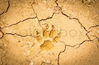 dog footprint on dry crack soil