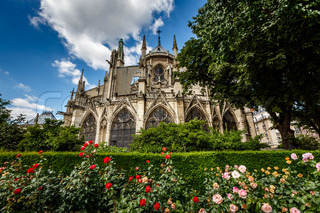 Notre Dame de Paris Cathedral with Red and White Roses in Foreground, France