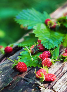 Freshly harvested wild strawberry on a stump