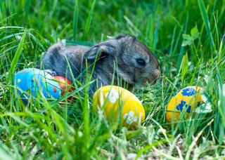 little easter bunny sitting in the grass