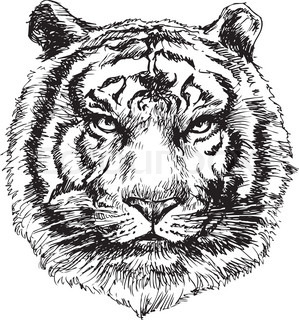 hand drawn tiger head