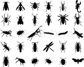 Set of bugs silhouette - vector