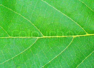 green natural leaf texture