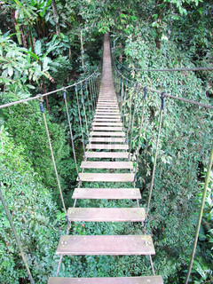 rope bridge on high forest tree , Chiang Mai, Thailand