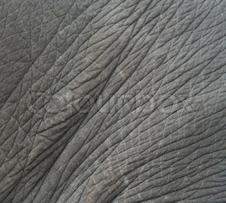 Texture of elephant skin use for background stock photo Dolphin Skin Texture