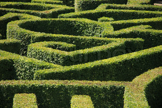 The game, labyrinth, clipped hedge in the summer, find the way out.