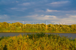 river and reeds