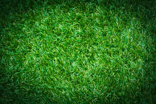 Artificial Grass Background Stock Photo Colourbox