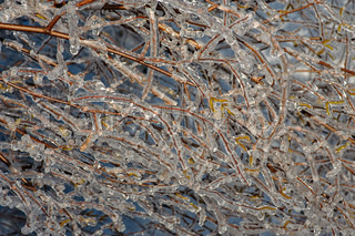 Tree branches frozen in ice after ice rain