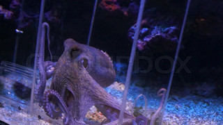 Monaco - Octopus moves in an aquarium
