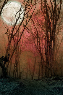 dark night forest agaist full moon