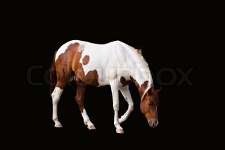 horse at thailand