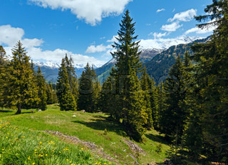 Alpine view with yellow dandelion flowers on summer mountain slope Austria