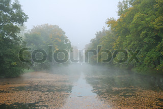 Long pond and forest park trees in misty morning weather