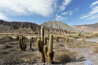 Cactuses and Quebrada de Humahuaca in the background