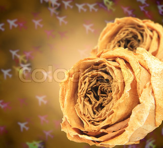 dual dry white rose on blur airplane bokeh
