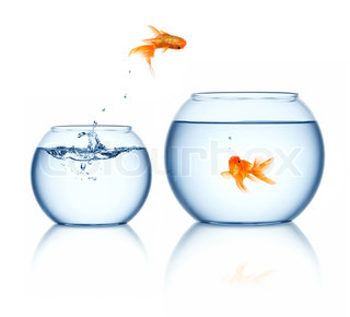 goldfisch. Black Bedroom Furniture Sets. Home Design Ideas