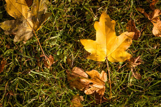 Leaves in warm colors