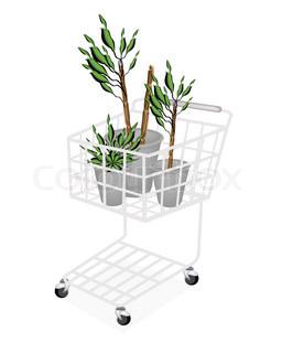 yucca b ume oder dracaena pflanzen in einem warenkorb stock vektor colourbox. Black Bedroom Furniture Sets. Home Design Ideas