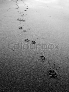 black and white Dog footsteps in sand