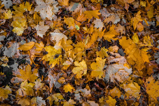 Autumn leaves in various colors