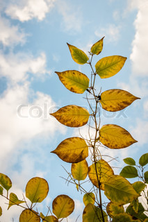 Autumn leafs reaching out to the sky